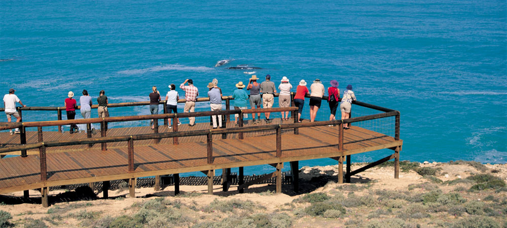Head of Bight whale-watching lookout