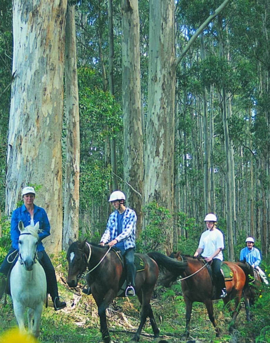 Horseriding group with dog.jpg