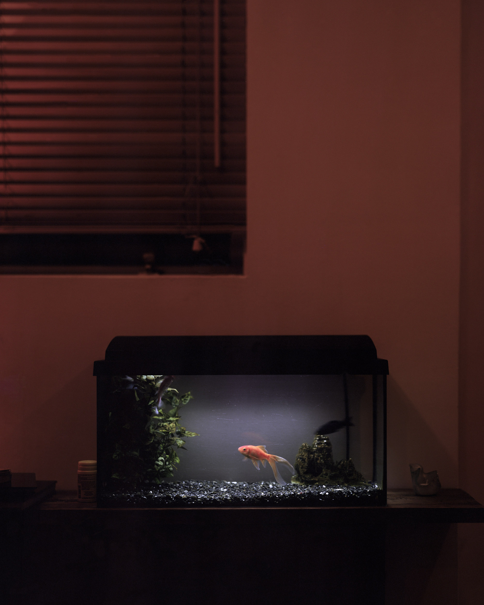 Erla's Goldfish
