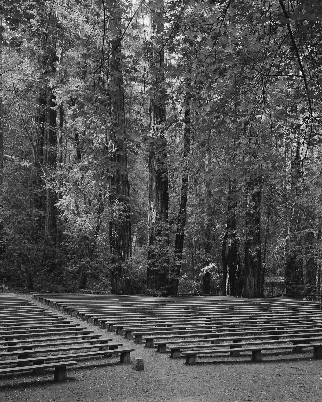 Redwood Amphitheatre