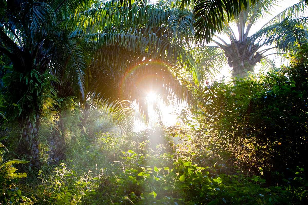 Palenque jungle in 2012