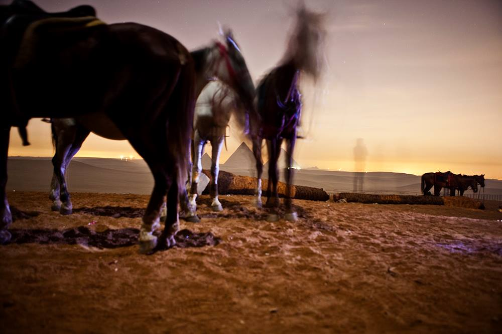 2am at Giza in the desert with horses