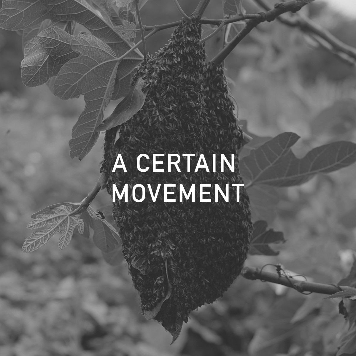 A CERTAIN MOVEMENT.jpg