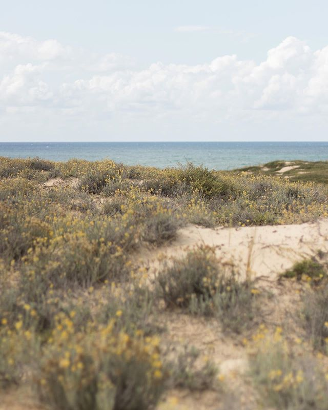 🌾🌾🌾 . . . . . . . . . . . . . . . #vacances #summermood #summervibes #holidays #capferret #oceanvibes #simplethings #naturephotography #naturelover
