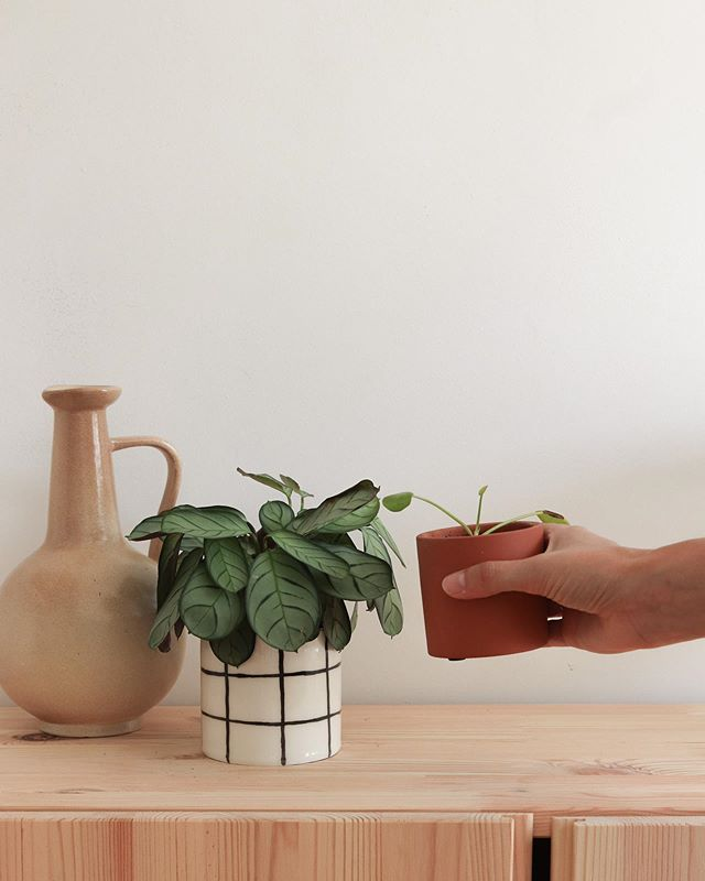 🌱 . . . . . . . . . . #homedecor #home #slowliving #leaf #parisianlife #slowlife #madecoamoi
