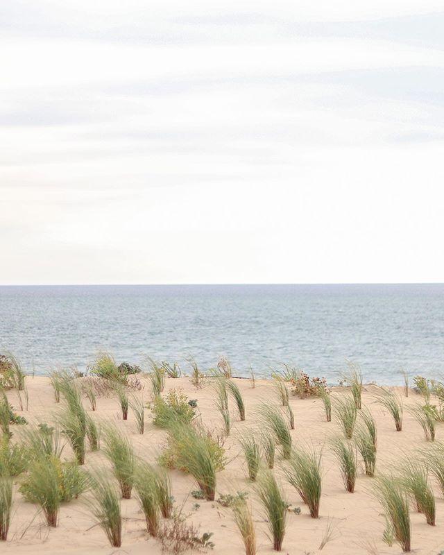 🌾. (Toujours très inspirée pour les légendes) . . . . . . . #summernostalgia #summervibes #capferret #ocean #photography