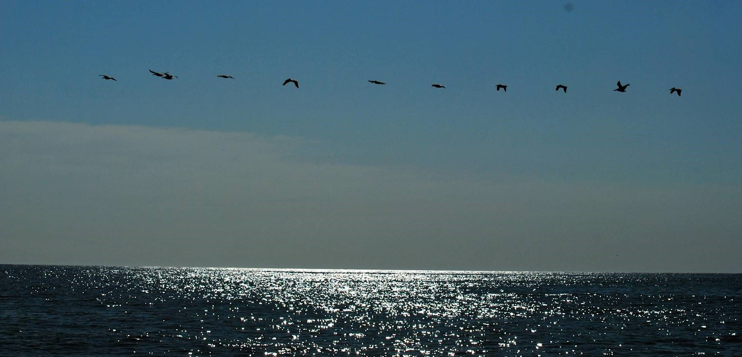 flying birds at beach.jpg