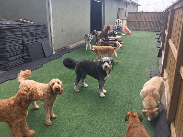 What a nice day! The dogs are loving it! #doggydaycare #windsorontario #windsordogs #dogsofinstagram #dogdaycare #windsor