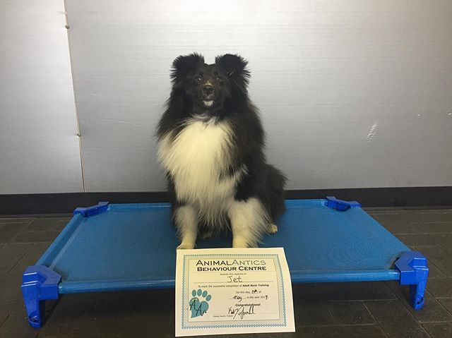 Congrats, Jet! You passed our Adult Obedience Class with flying colours. Can't wait to see you in level 2!