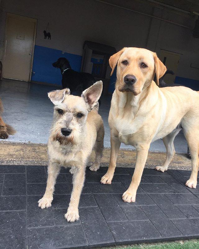 Walter & Kaylee 😎 #dogsofwindsorontario #doggydaycare #dogdaycare #windsor #dogsofinstagram