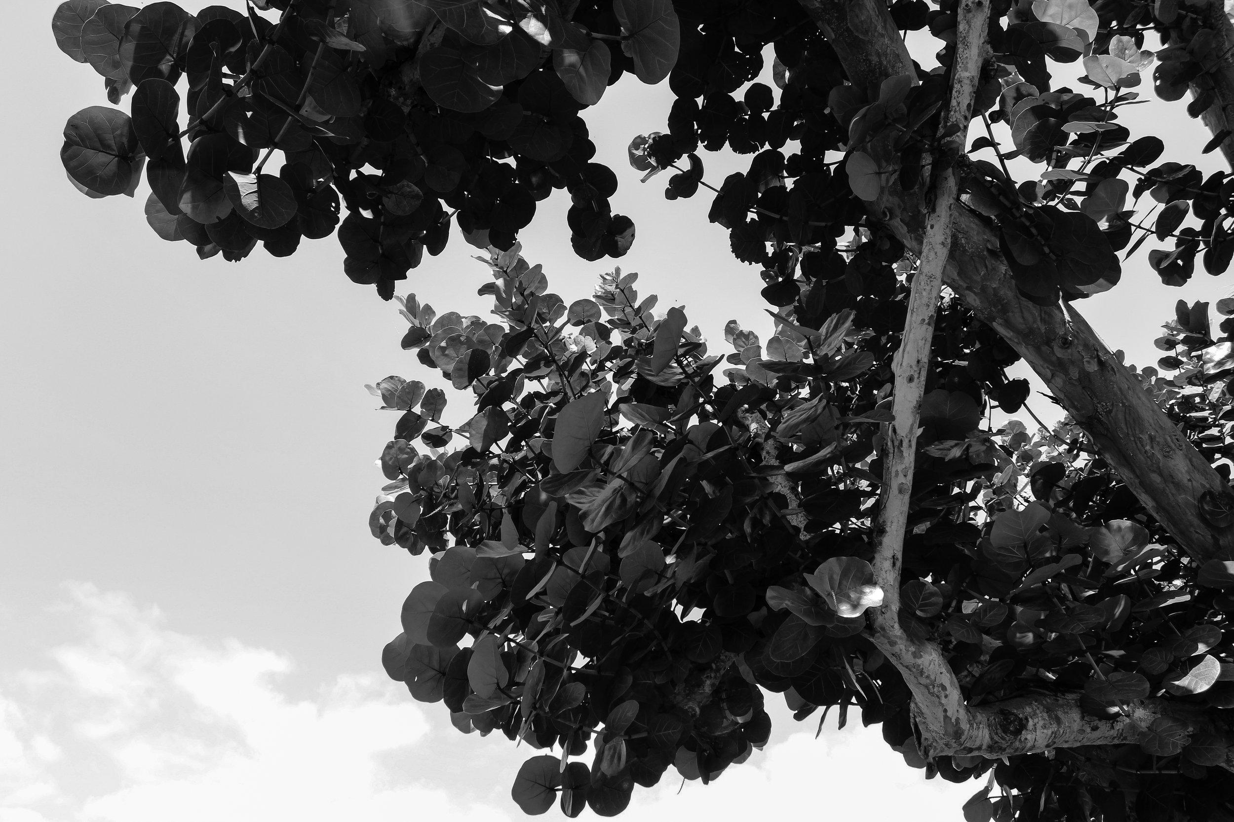 MANTA_RS19_BWflora-3.jpg