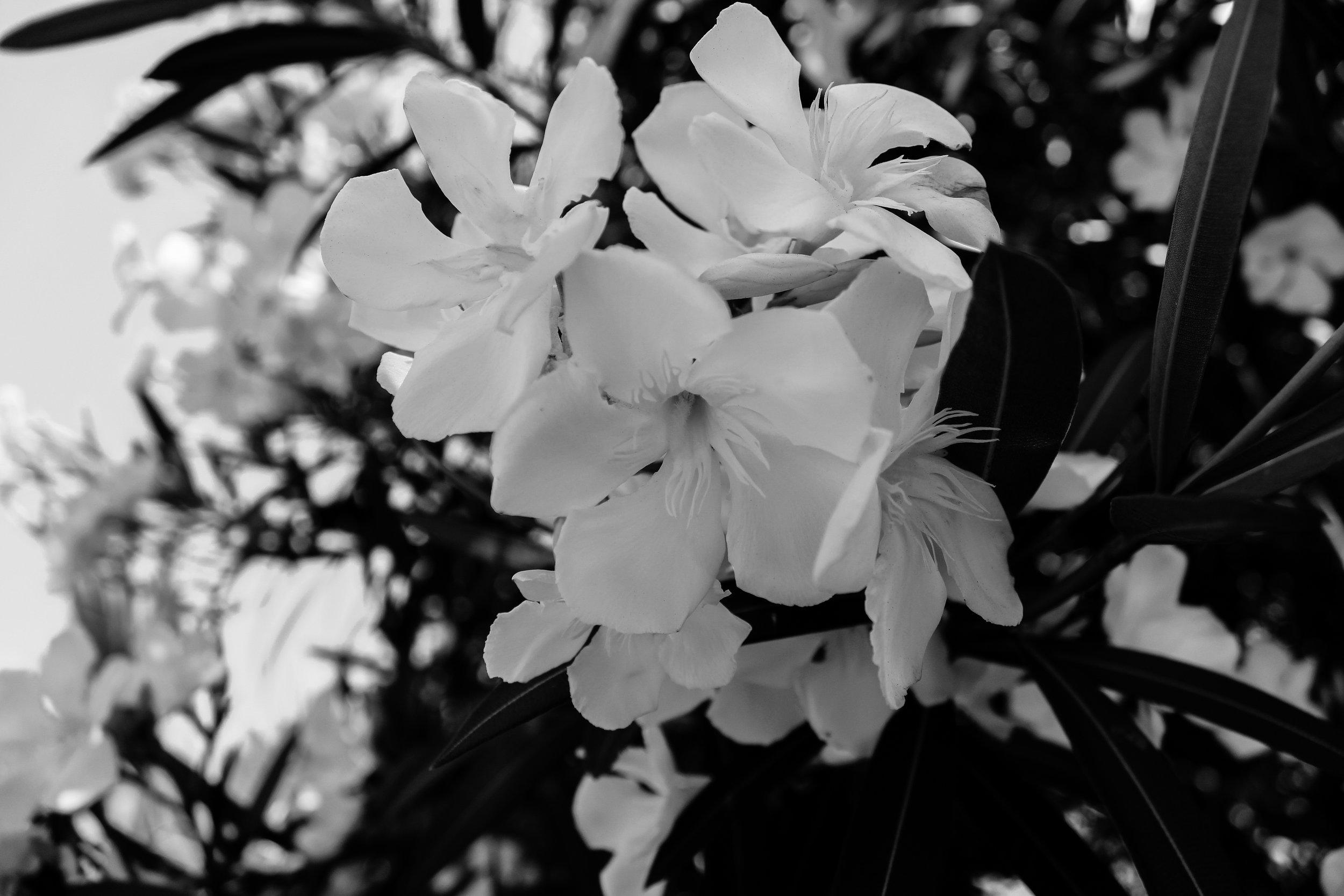 MANTA_RS19_BWflora-5.jpg