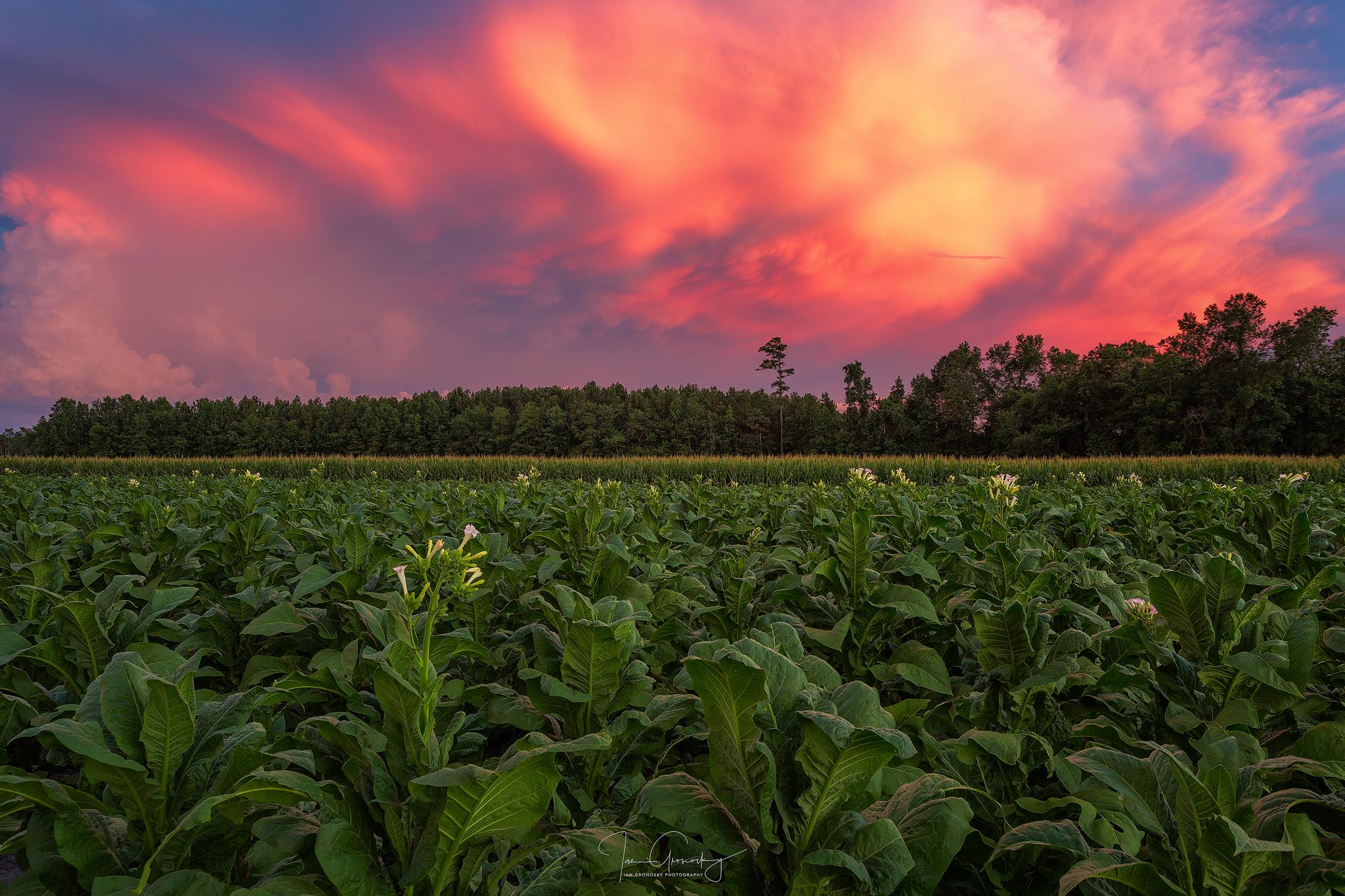 Farm 1 FB.jpg