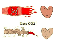 (image    normalbreathing.com    :     with enough CO2 the blood vessels open; letting fresh blood flow in to the vital organs like heart, brain, kidneys, liver etc. In case of less CO2 constricting of the blood vessels restricts the blood flow)