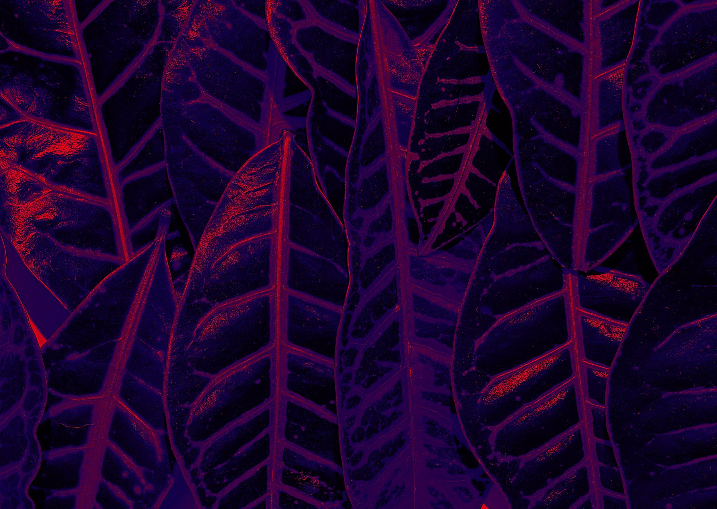 pantone-ultraviolet-2018-by-leandro-crespi-stocksy.jpg