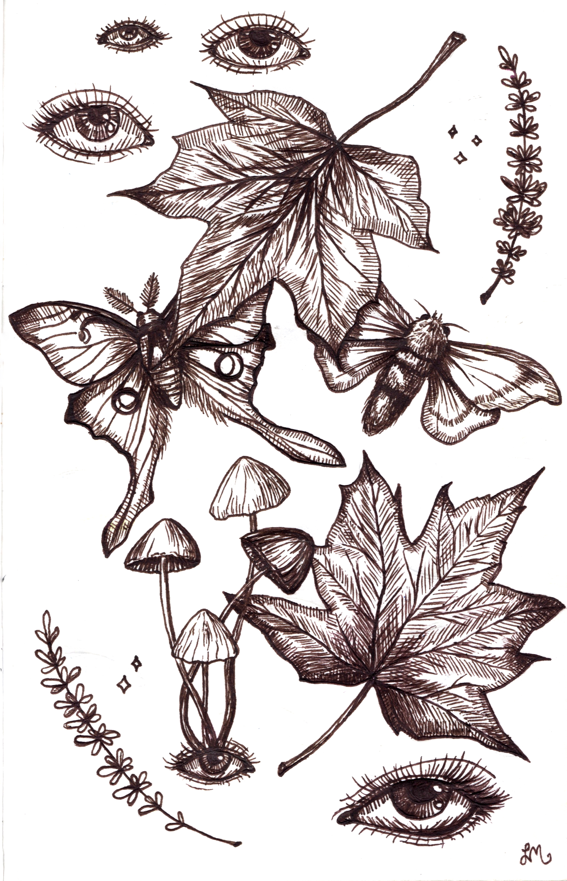 Moths and Maple