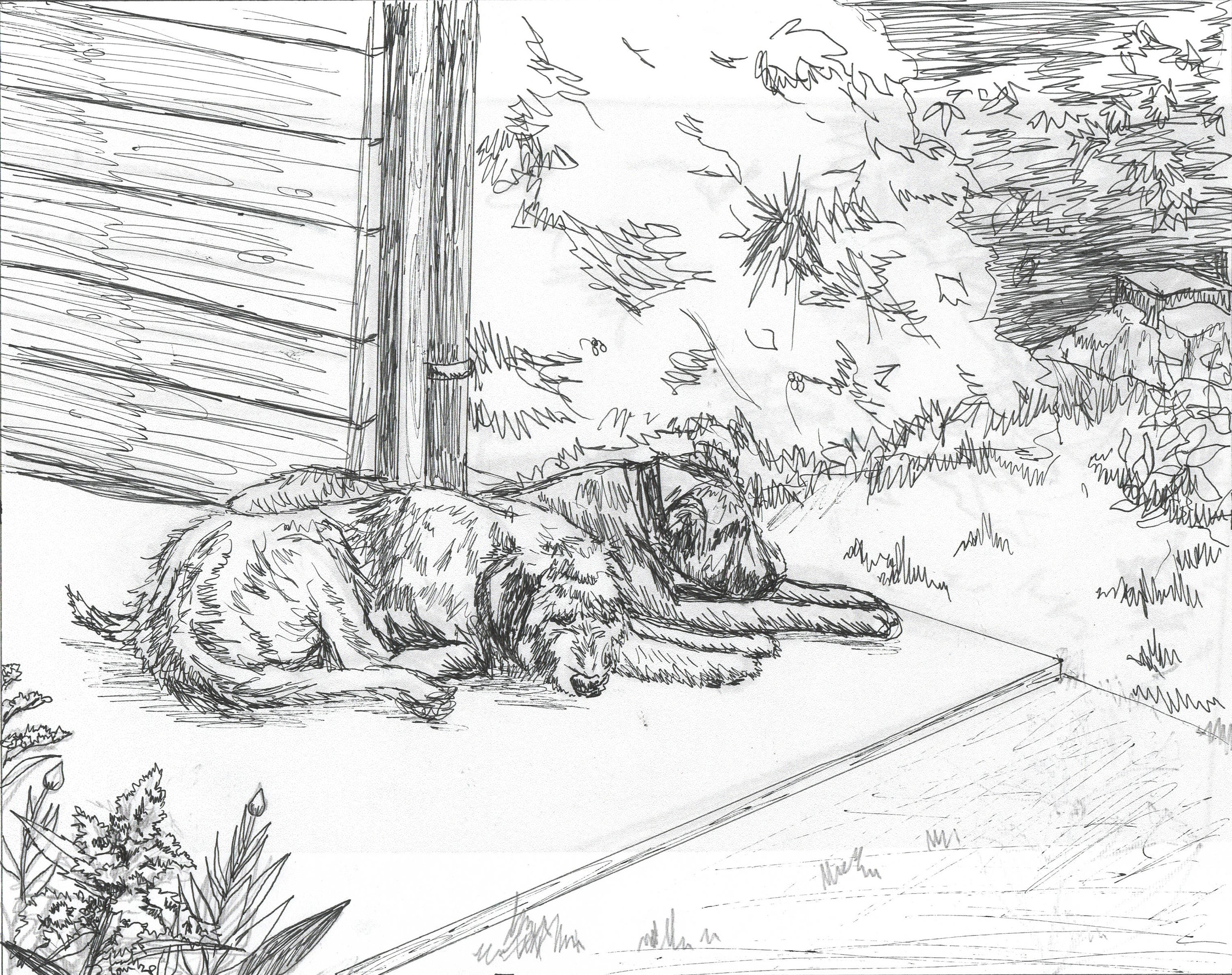 Wolfhounds sketch.jpg