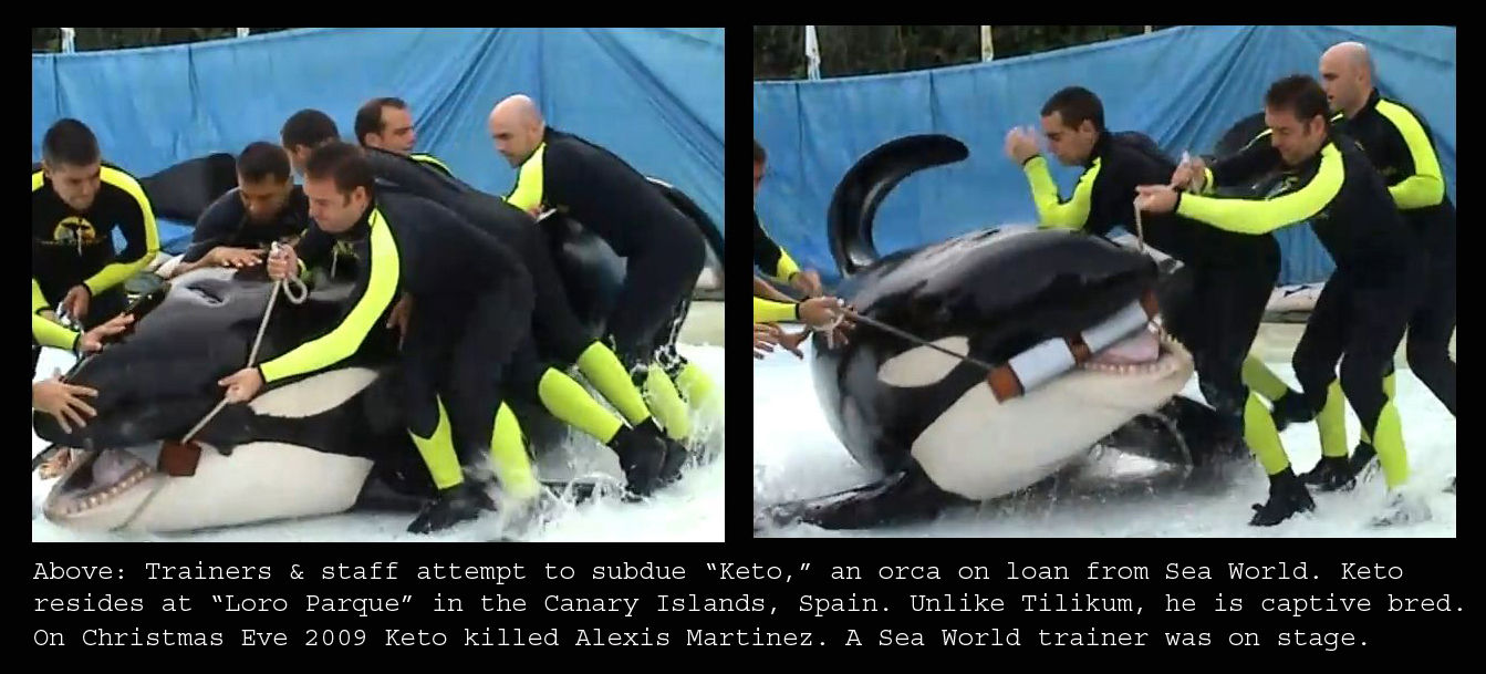 Image: Voice of the Orcas