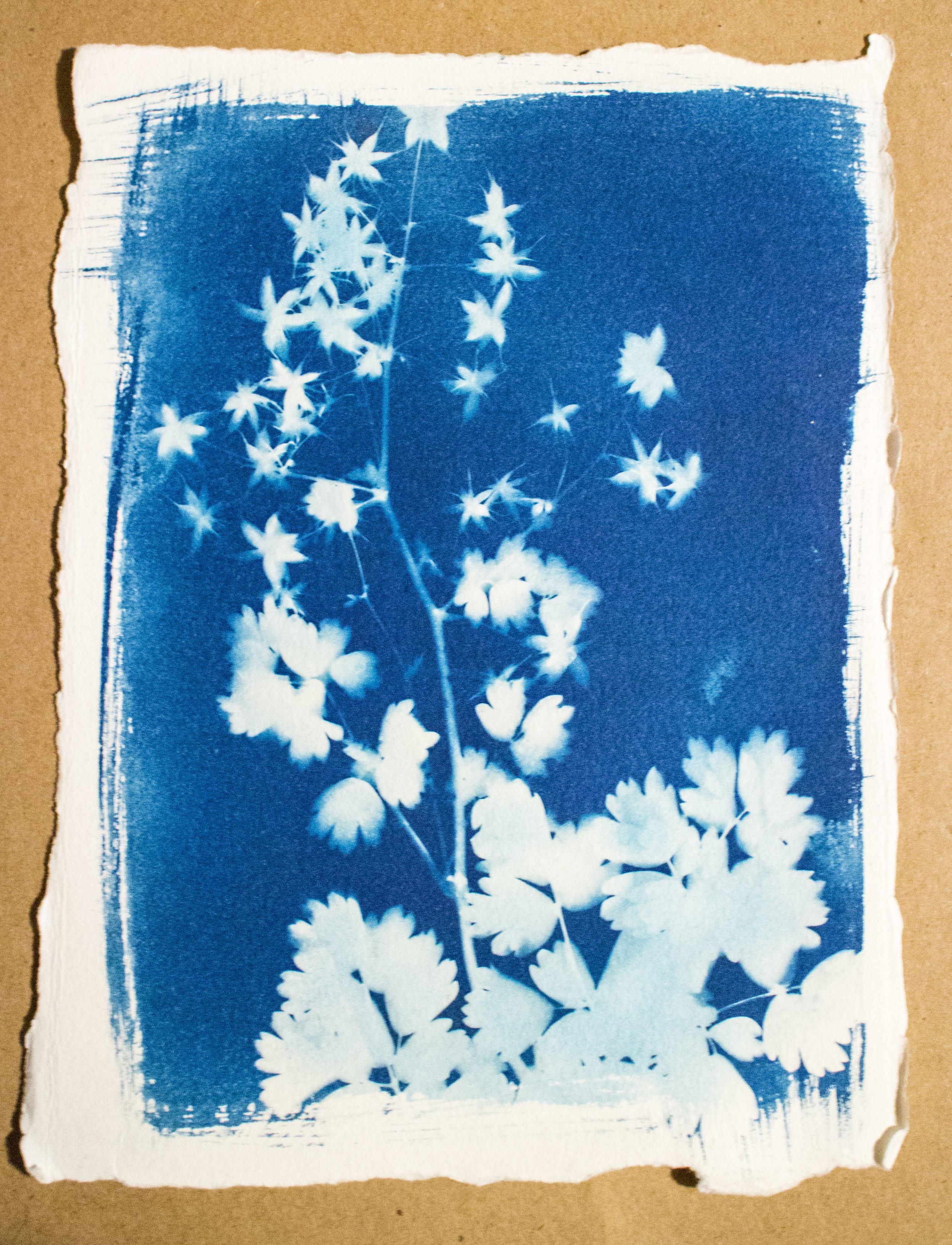 CyanotypeImprints01.jpg