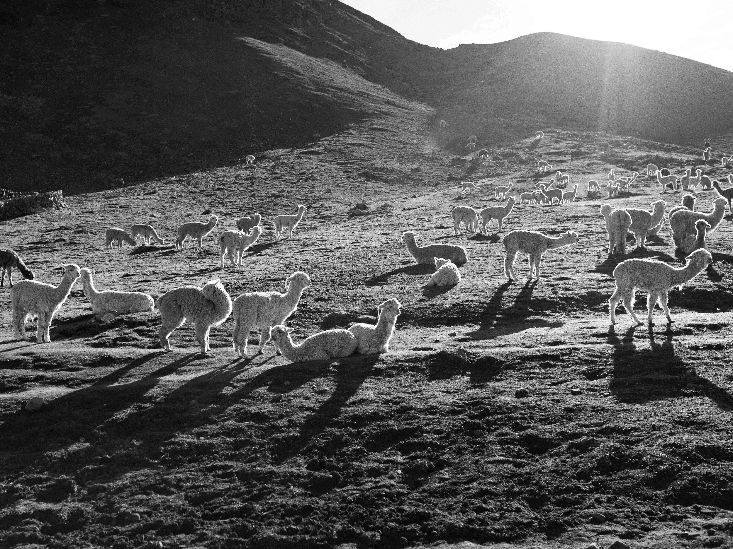 Cusco_Rainbow_Mountain_Mauricesinclair_16.jpg