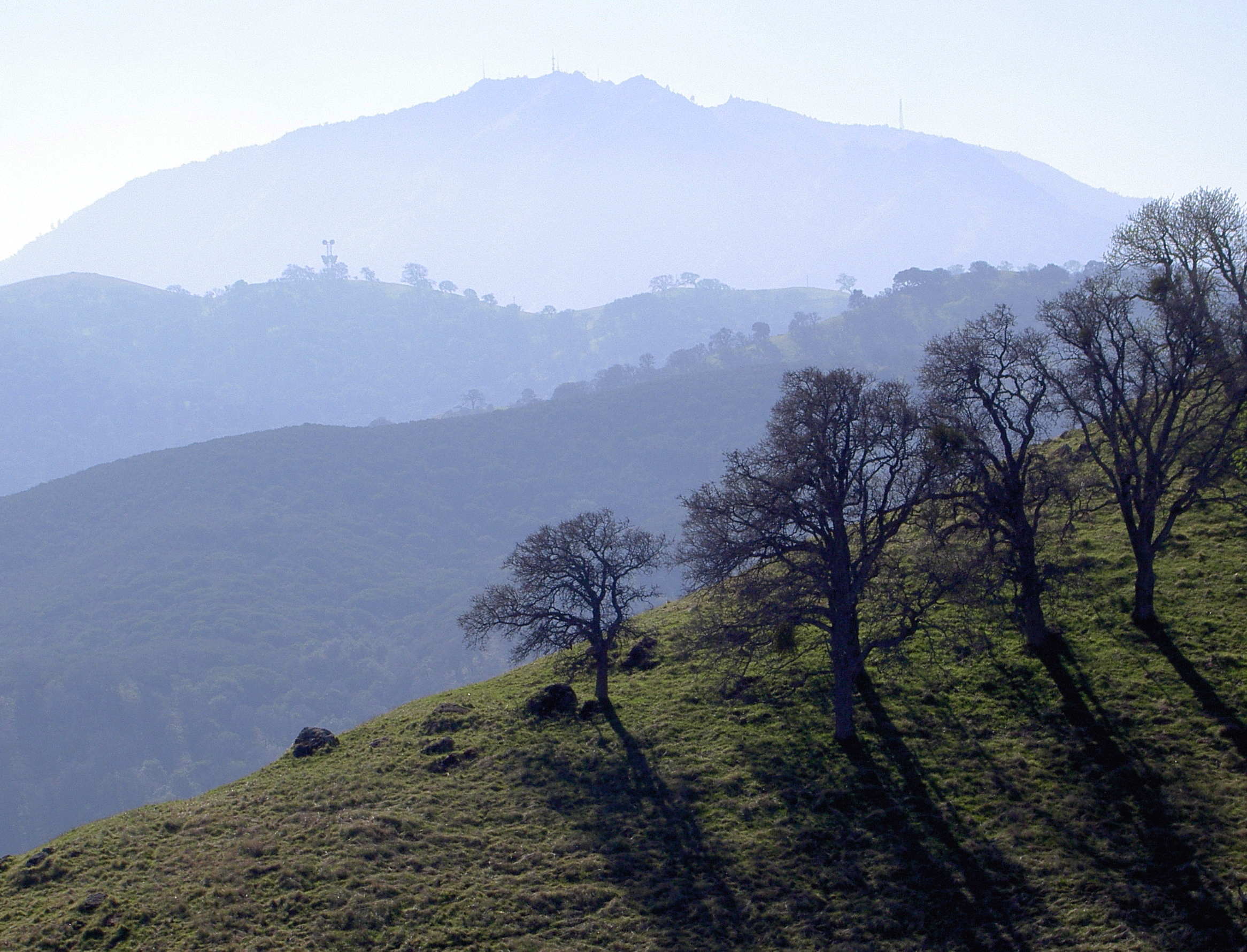 Misty morning at the intersection of Stewartville and Ridge trails. In the background rises Mt. Diablo's North Peak.