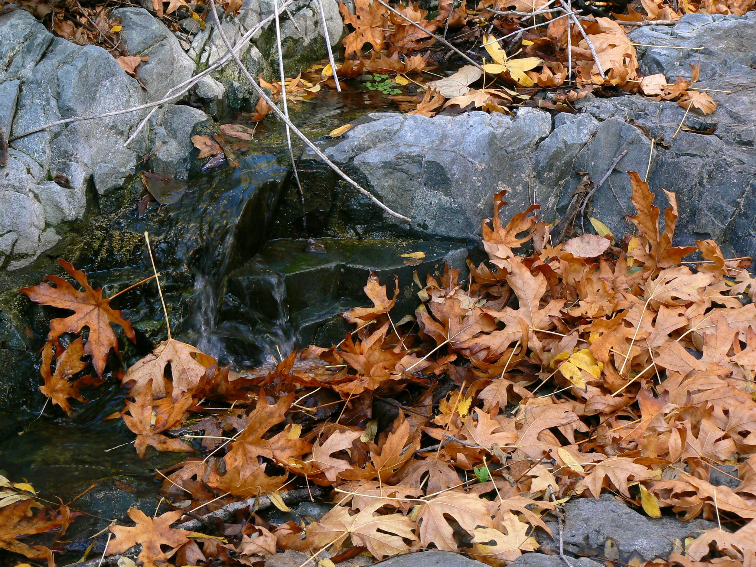 Mitchell Creek in autumn.
