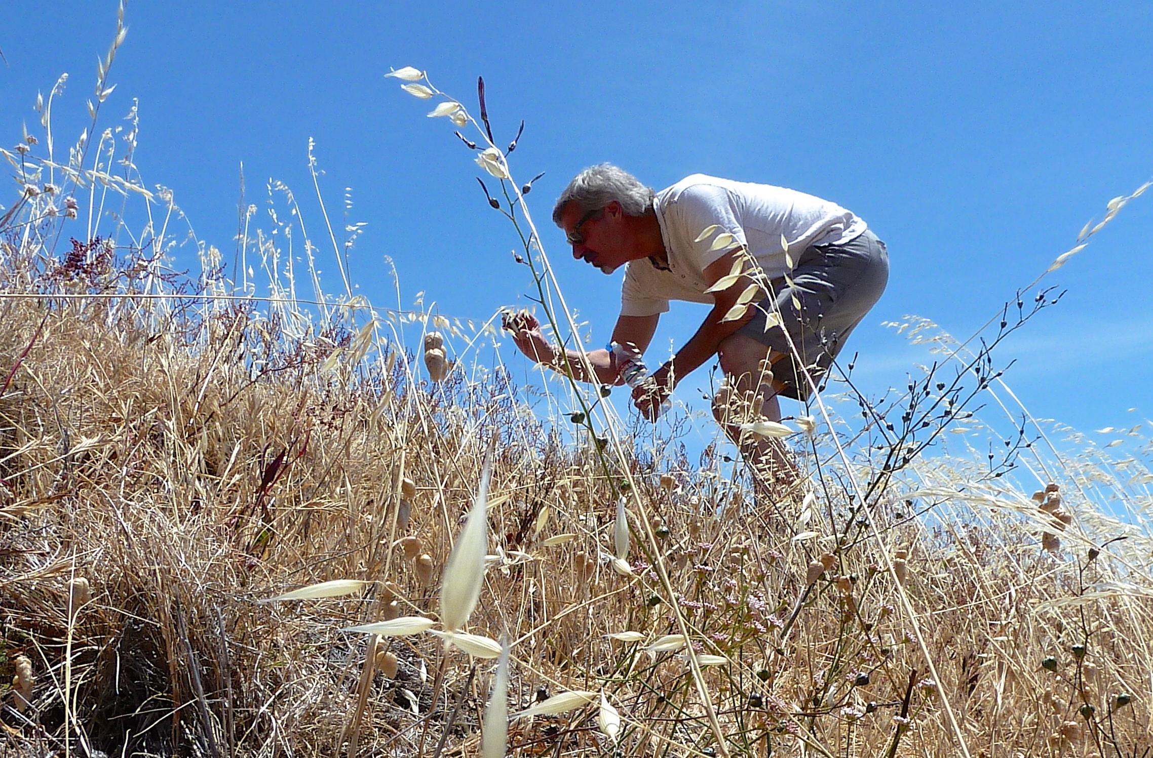 Jim Reese inspects the coastal flora on a hillside at Mt. Tamalpais State Park.