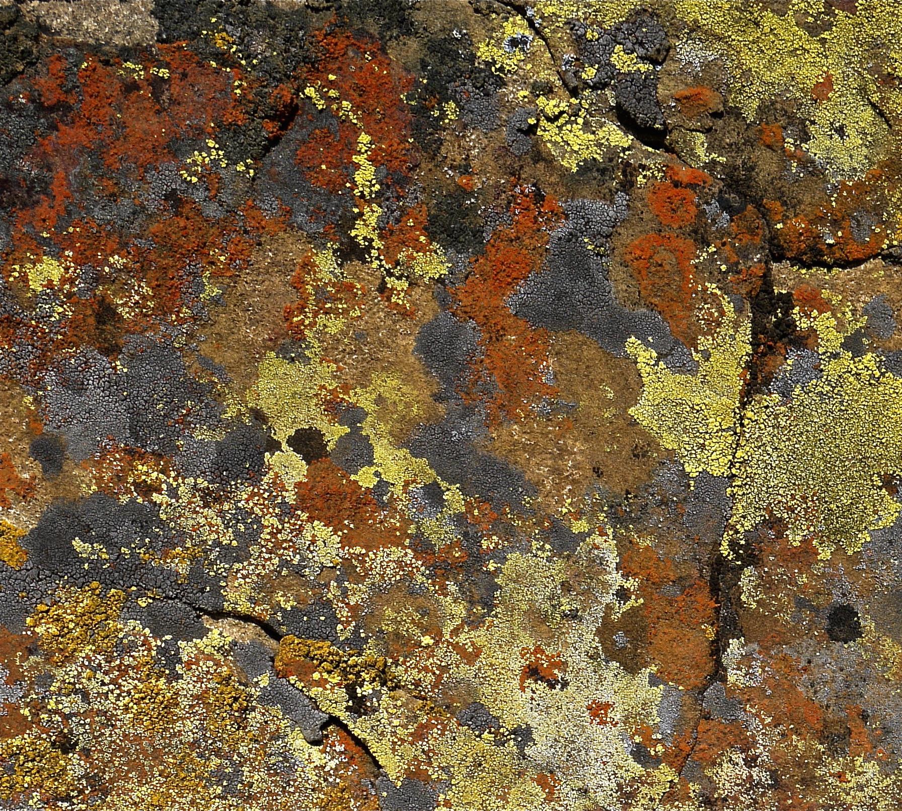 Crustose lichen spatters a boulder in Round Valley.