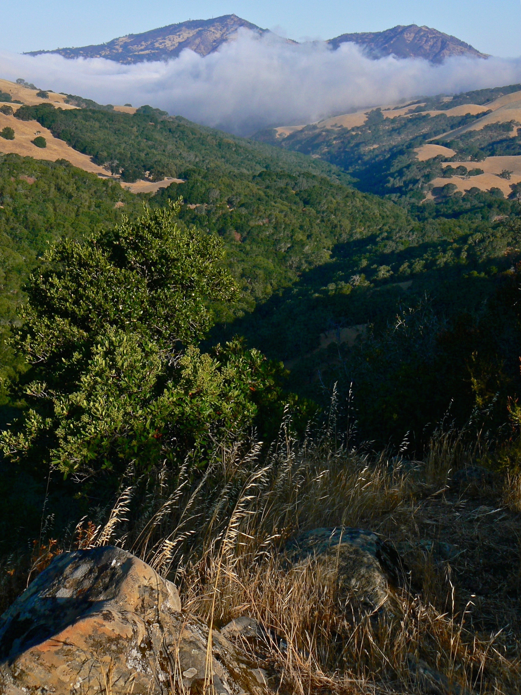 Morning on the Prairie Falcon ledge. The canyon below is cut by the headwaters of Marsh Creek.