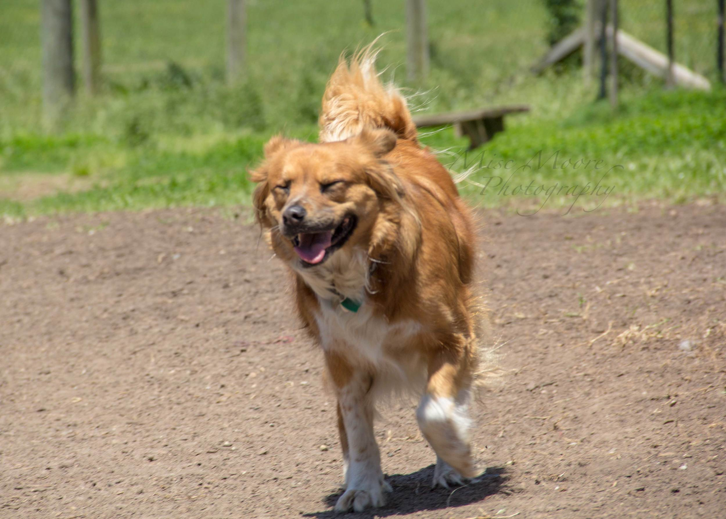 The best jokes are told at the dog park.