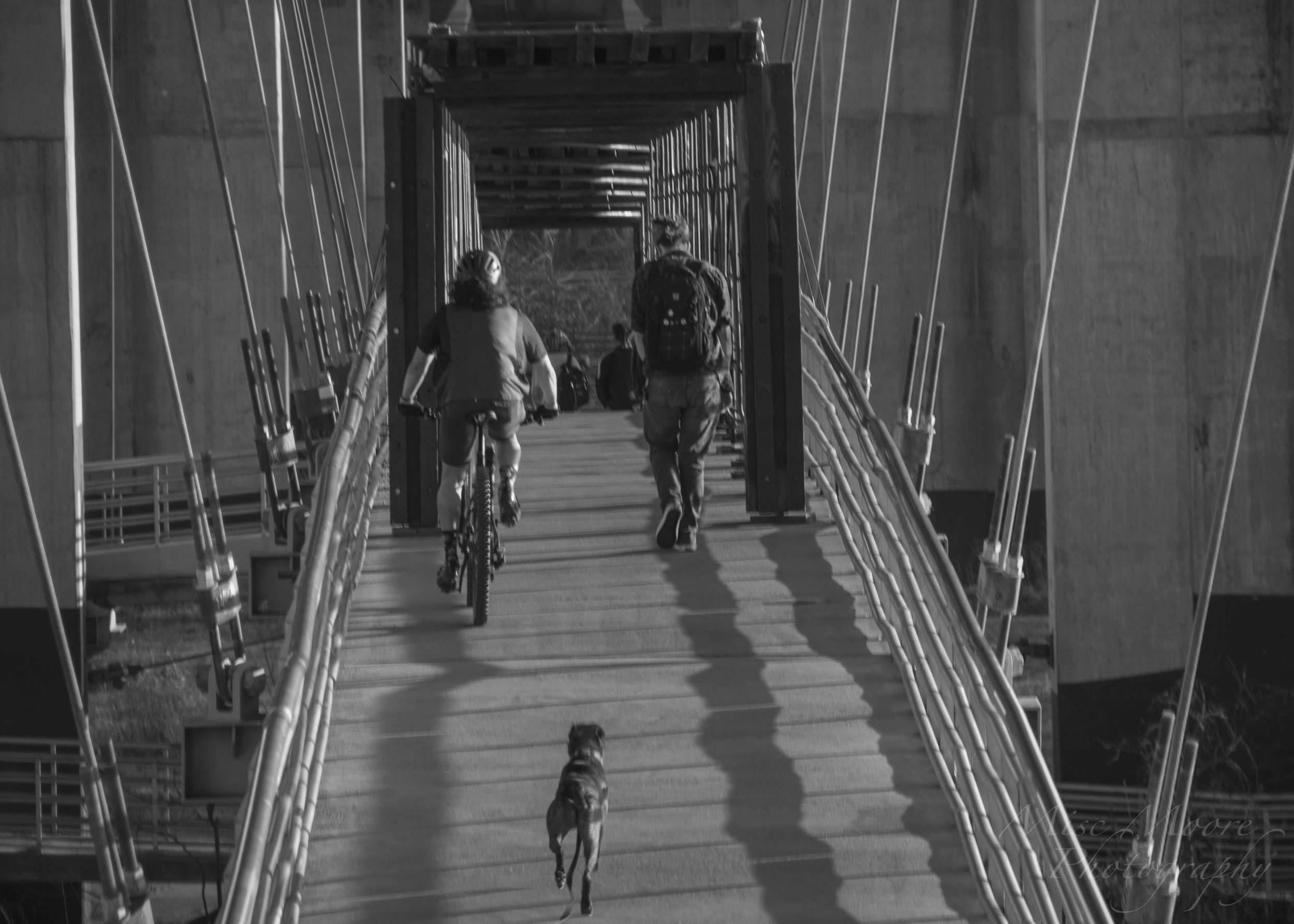 bike-jog-dog.jpg