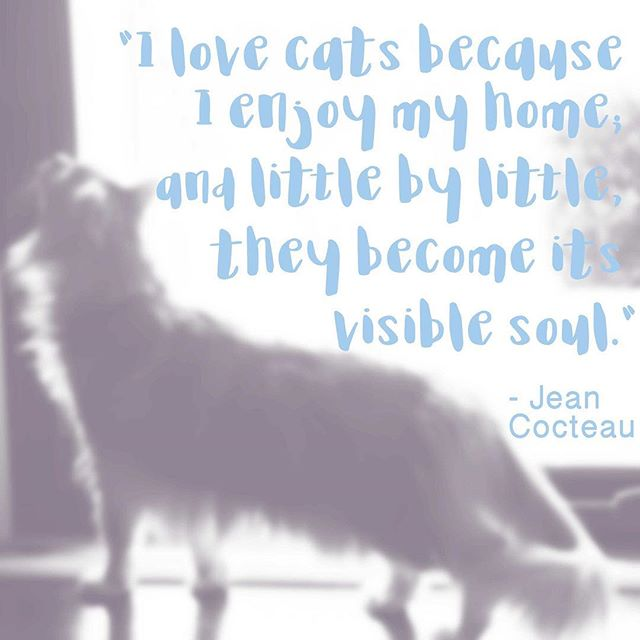 #truth . . . . #instacat #instaquote #instaquotes #catlife #jeancocteau #quoteoftheday #petlove