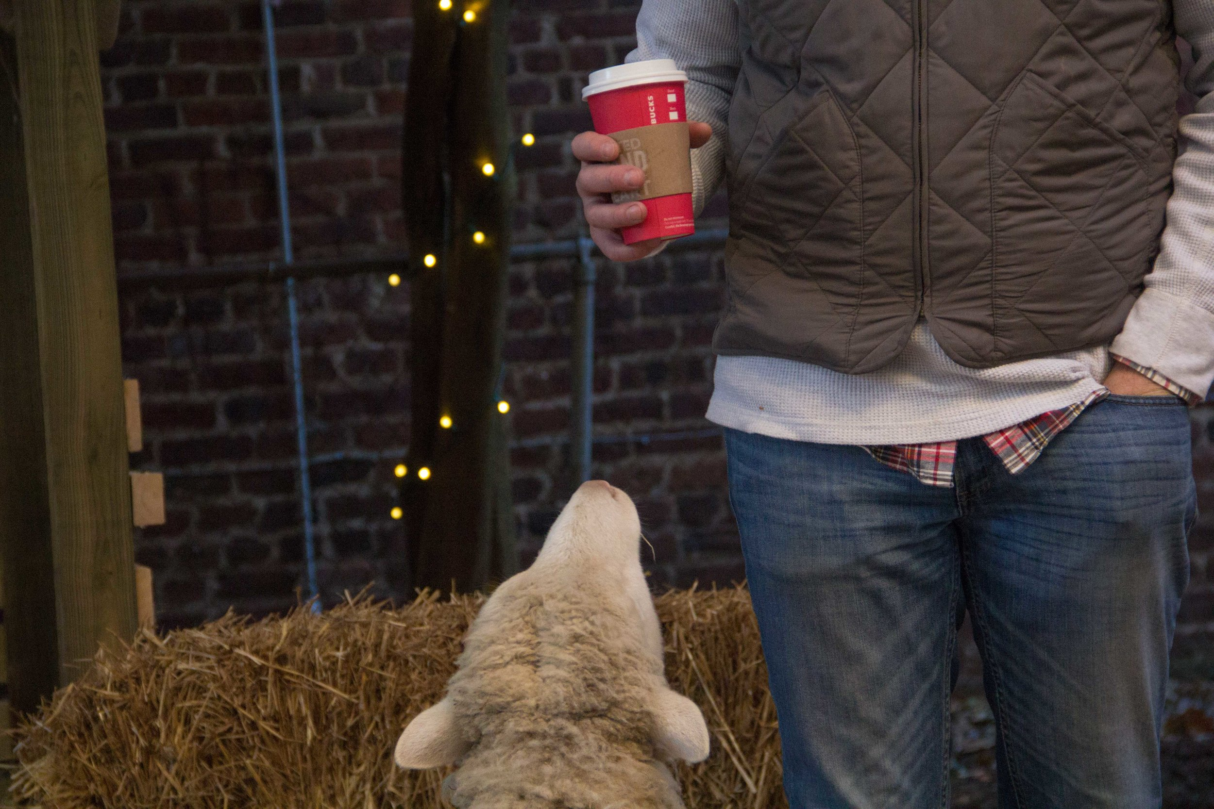 Sheep and Starbucks