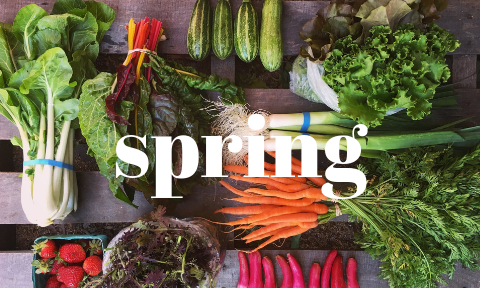 spring (1).png