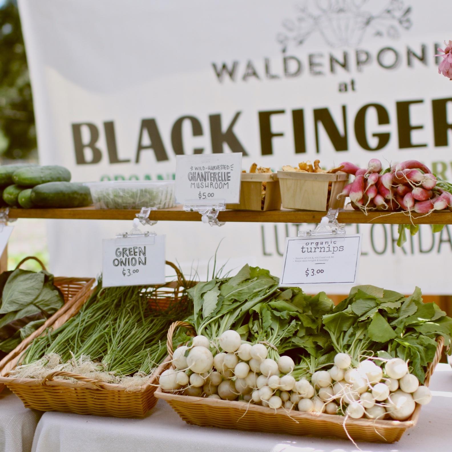 BLACK FINGER FARMLUTZ - Fridays 10am - Sunday 8pm (Self-Serve) | Produce available to Public, 6109 Lakeside Drive, Lutz, FL, 33558