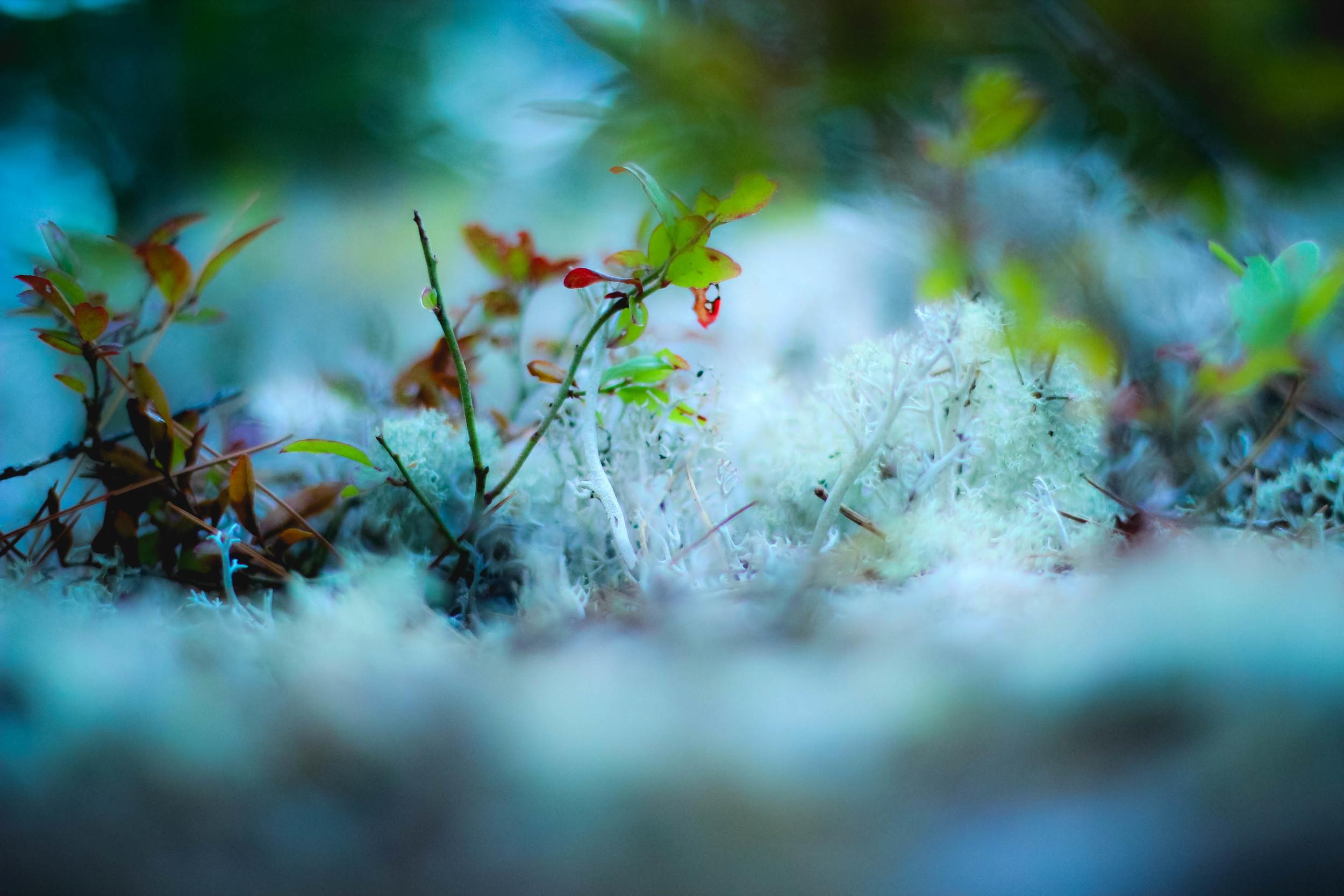 Nature itself-4.jpg