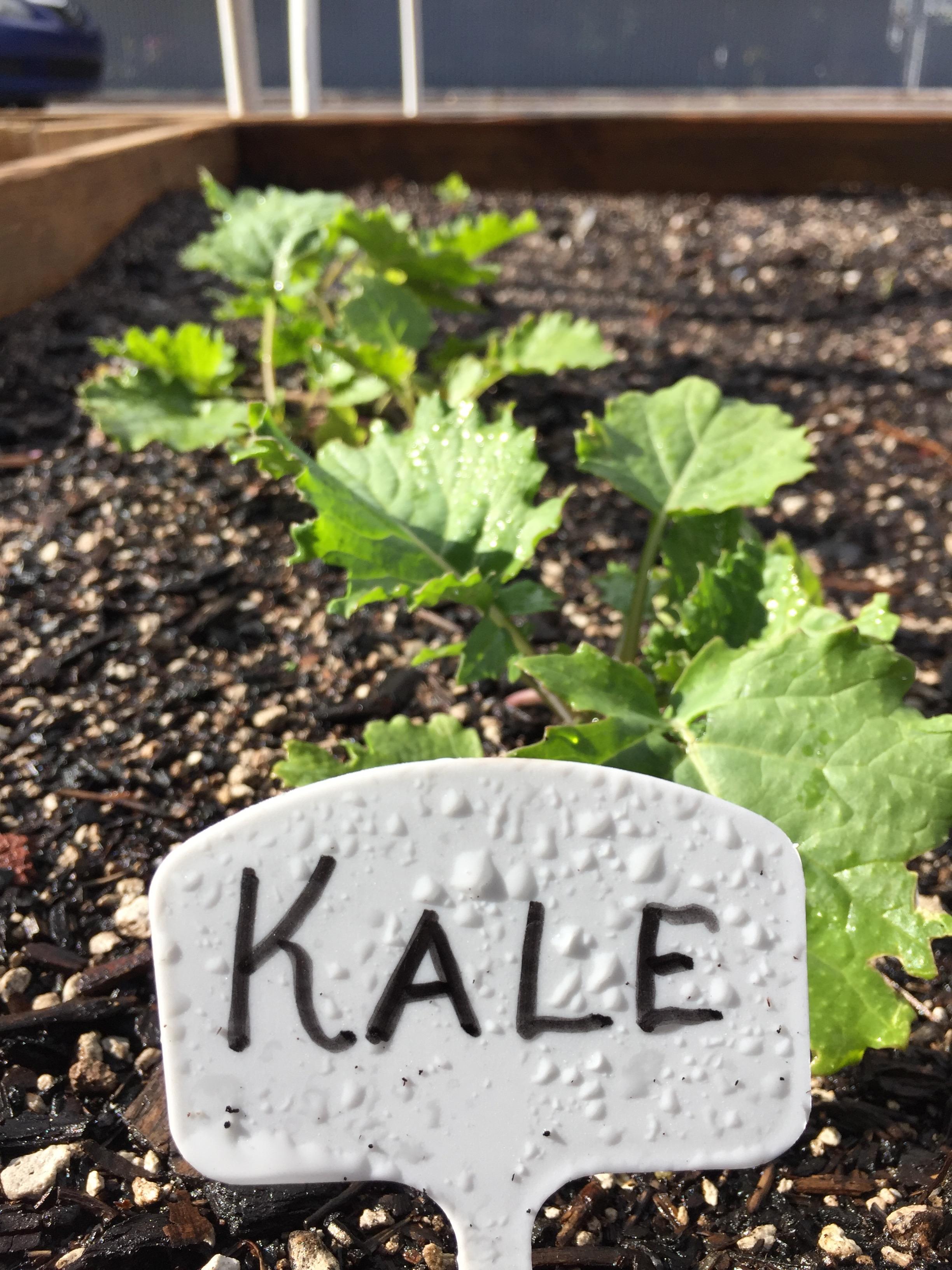 Kale FB1.jpg