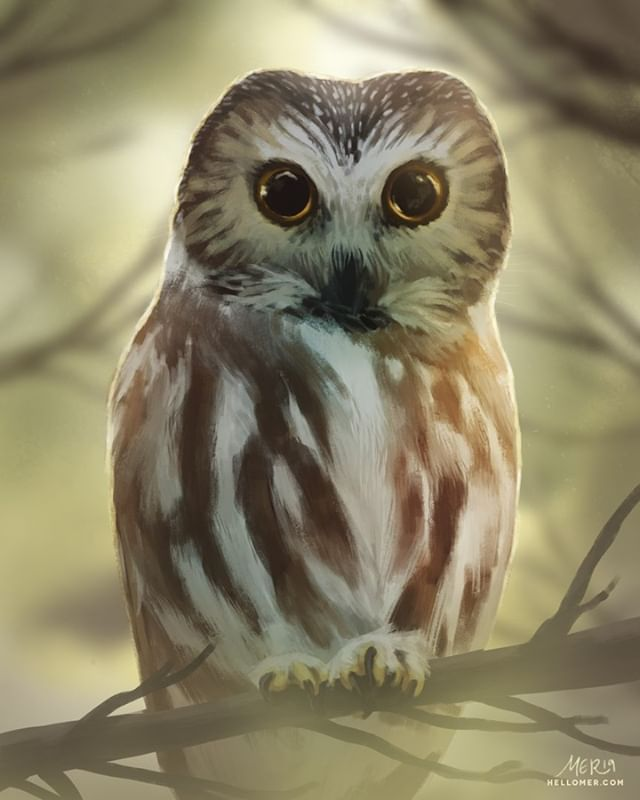 "The Saw-whet Owl (or as I call it, teeny bb owl) is named from the ""skewing"" noise it makes, similar to whetting (sharpening) a saw. Painted this piece for the #BirdWhispererProject for Feb. Based off photo by Andy Reago & Chrissy McClarren. - #SciArt #BirdArt #BirdWhisperer #Illustration #ArtistsOfInstagram #Art #Ornithology #Owls #OwlArt"