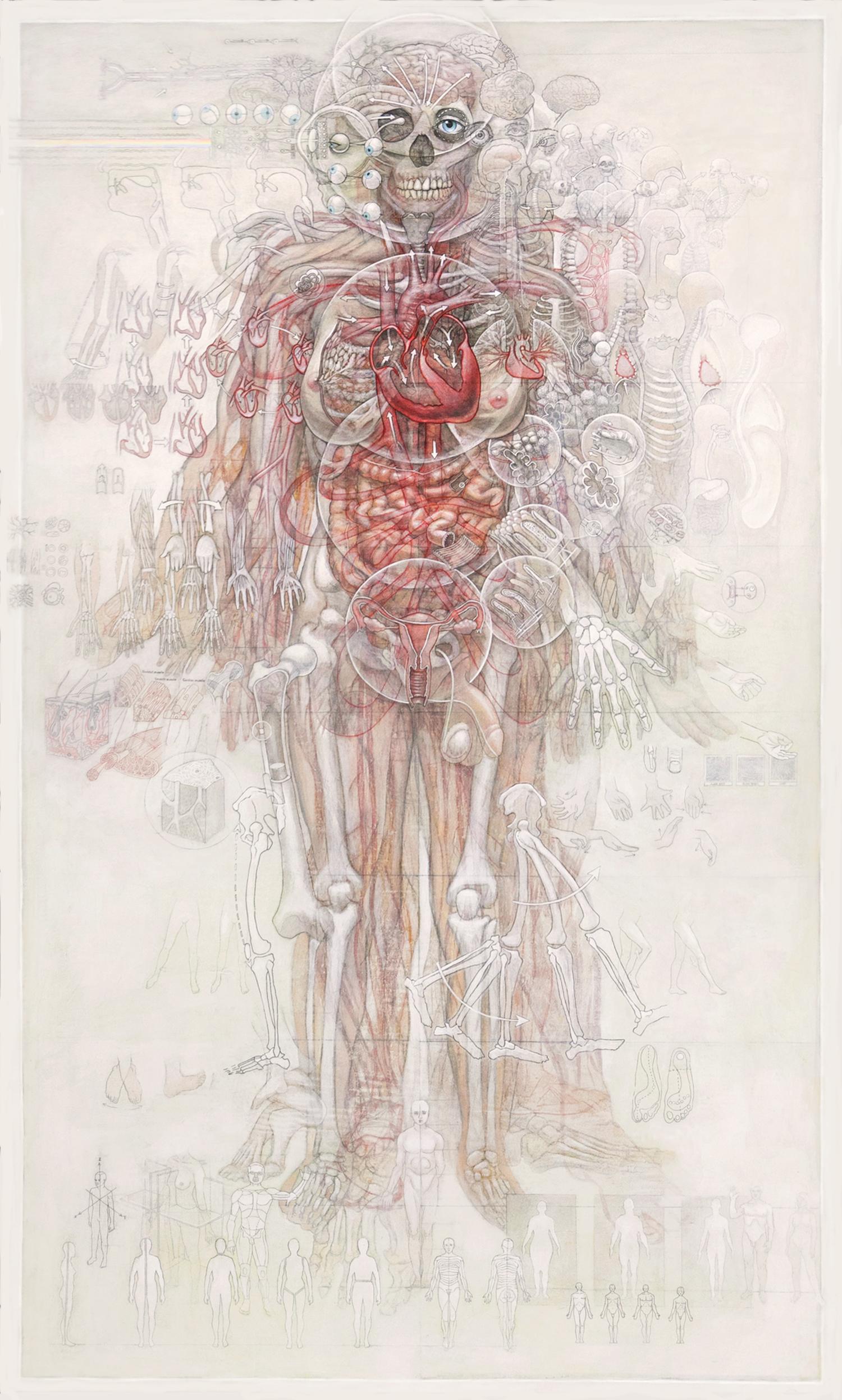 human-anatomy--v-1-3-casey-cripe.jpg