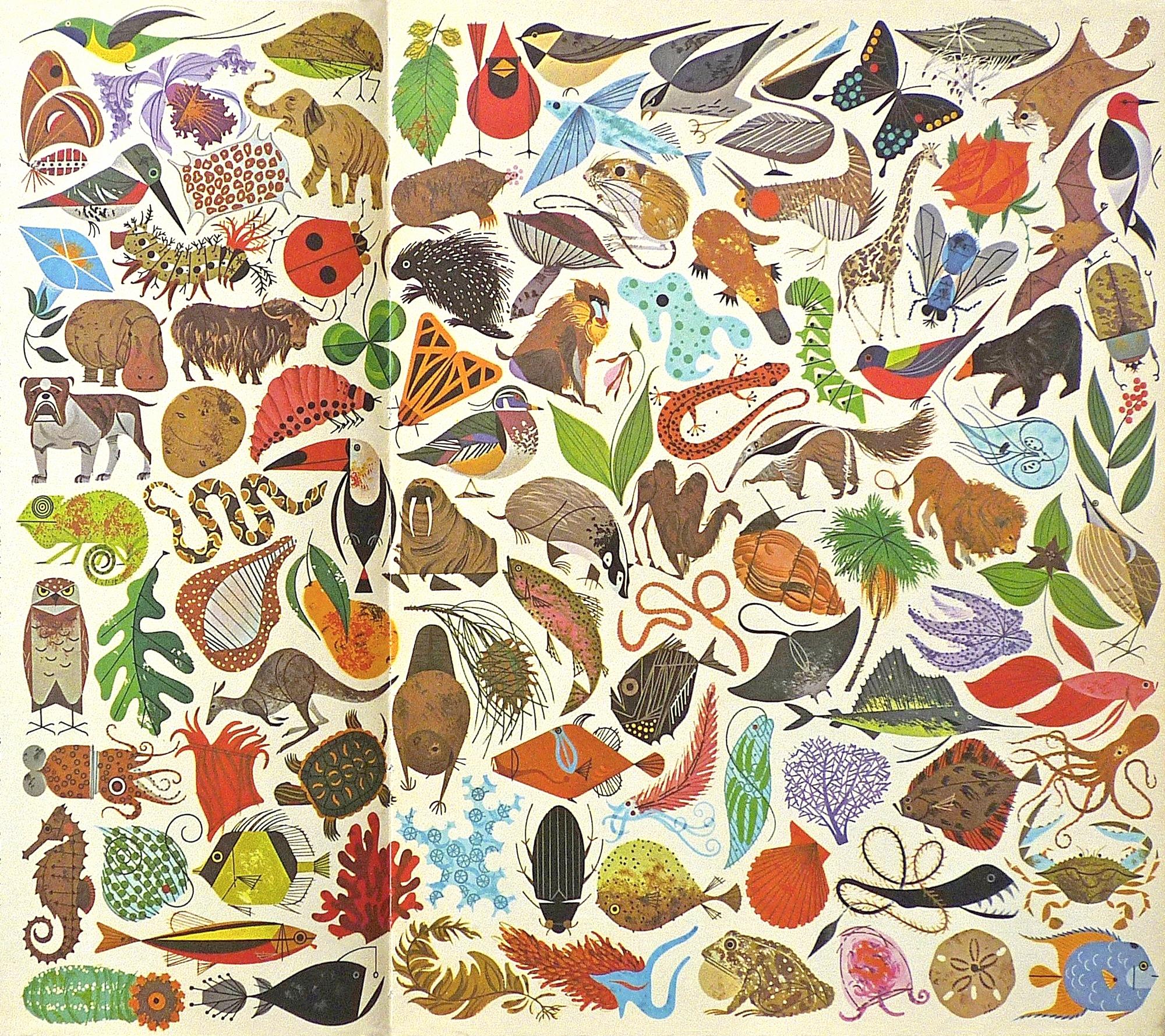 animal-illustrations-casey-cripe.jpg