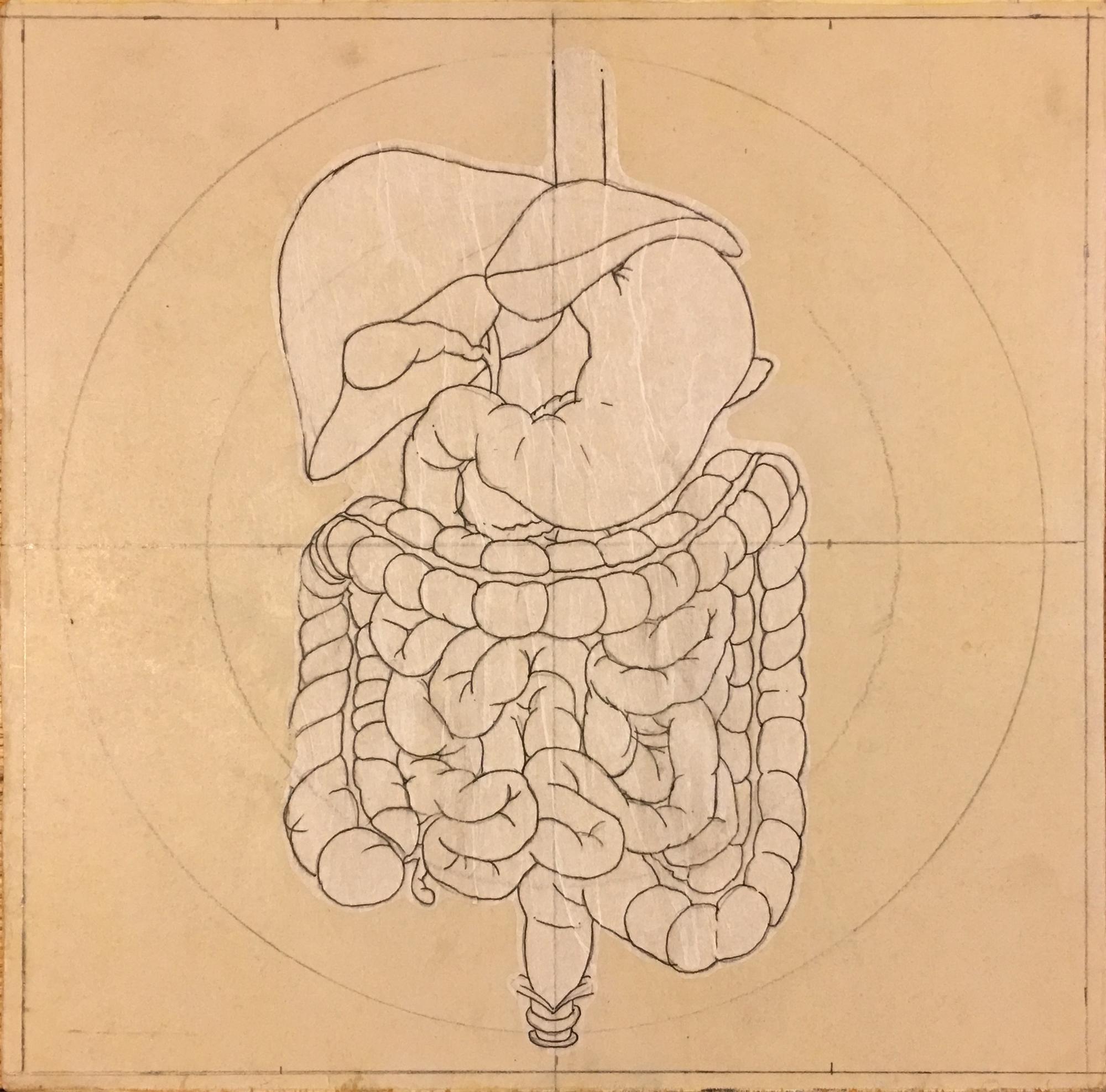 humandigestive(1).jpg