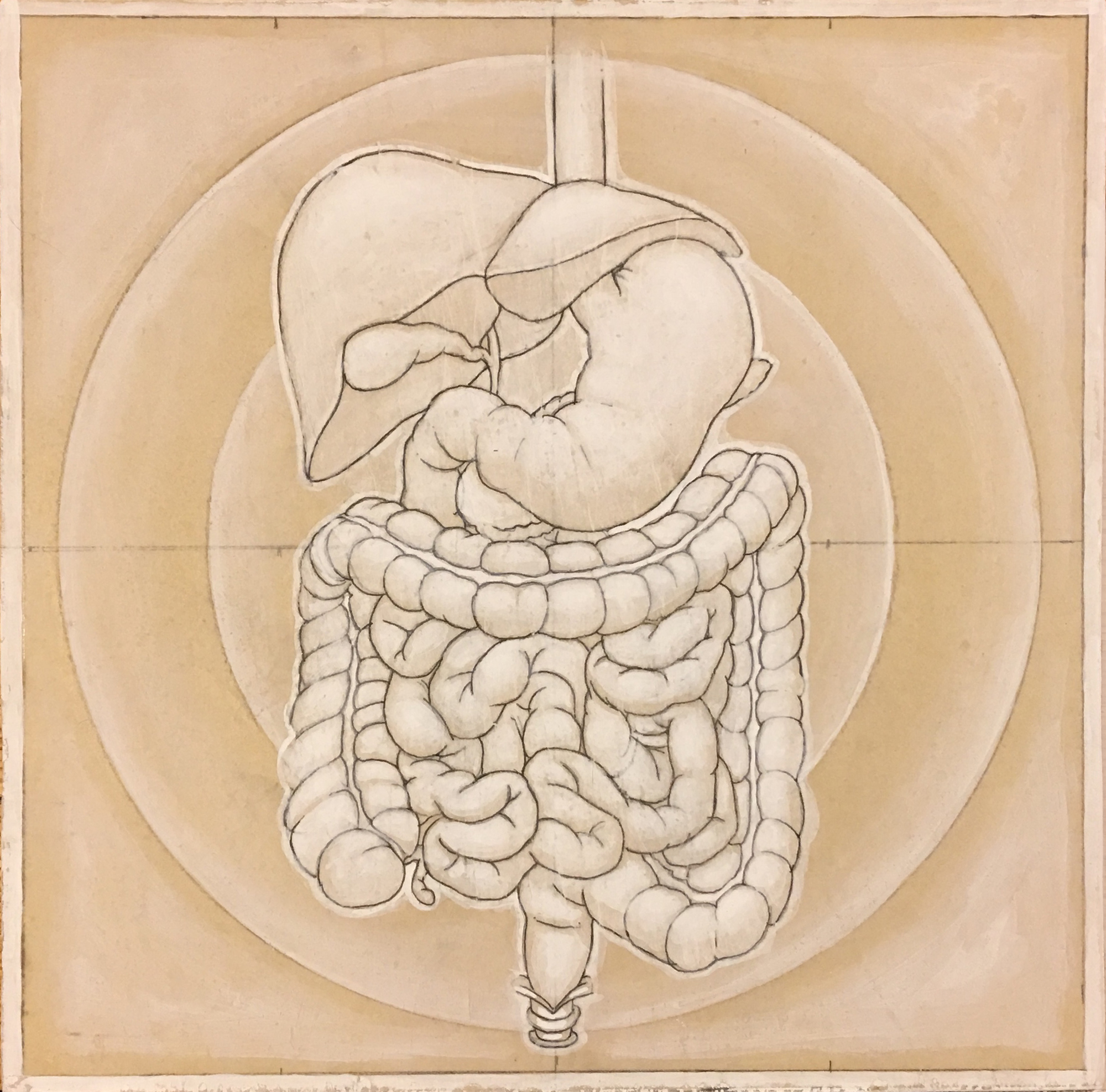 humandigestive(2).jpg