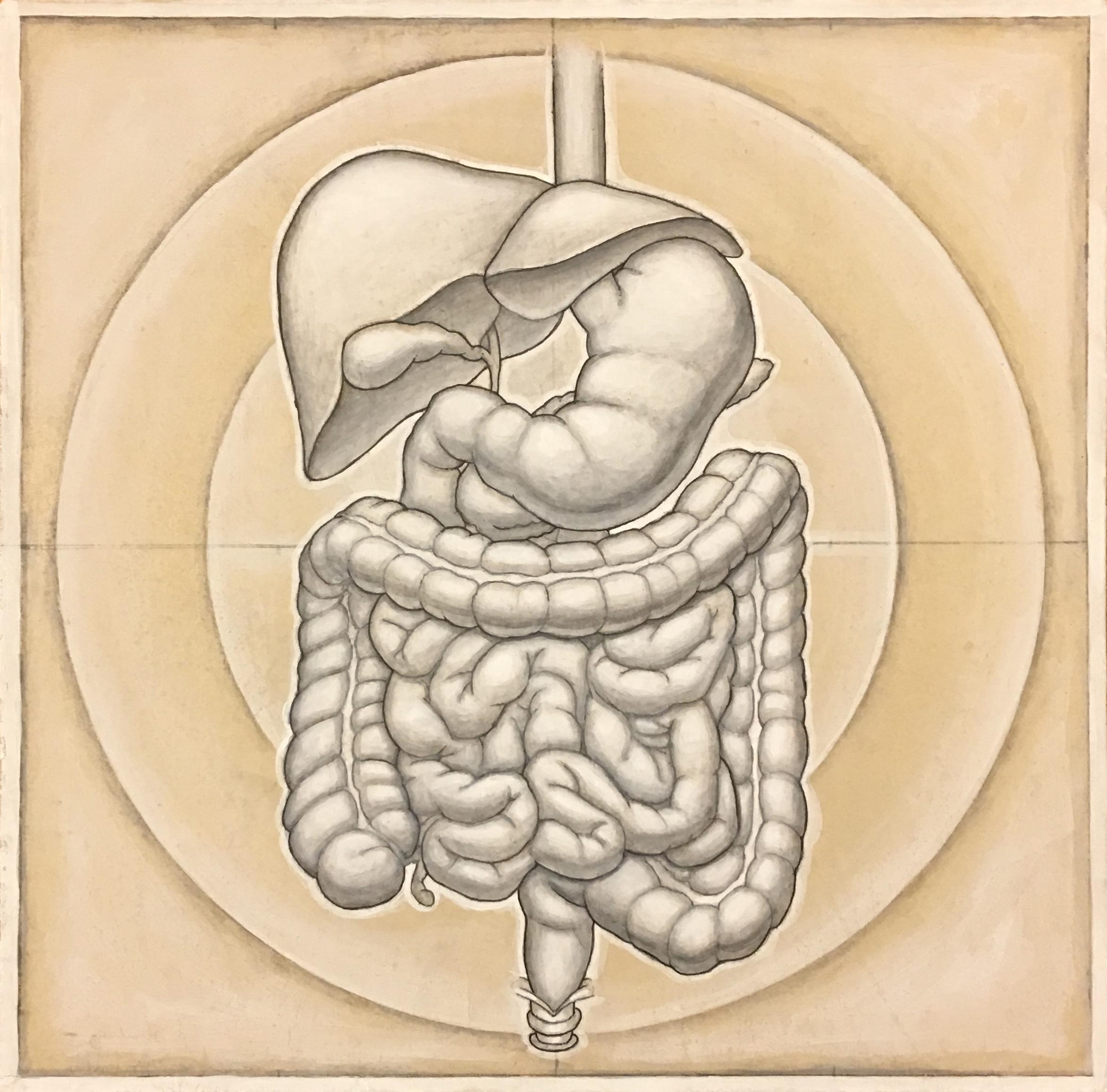 humandigestive(3).jpg