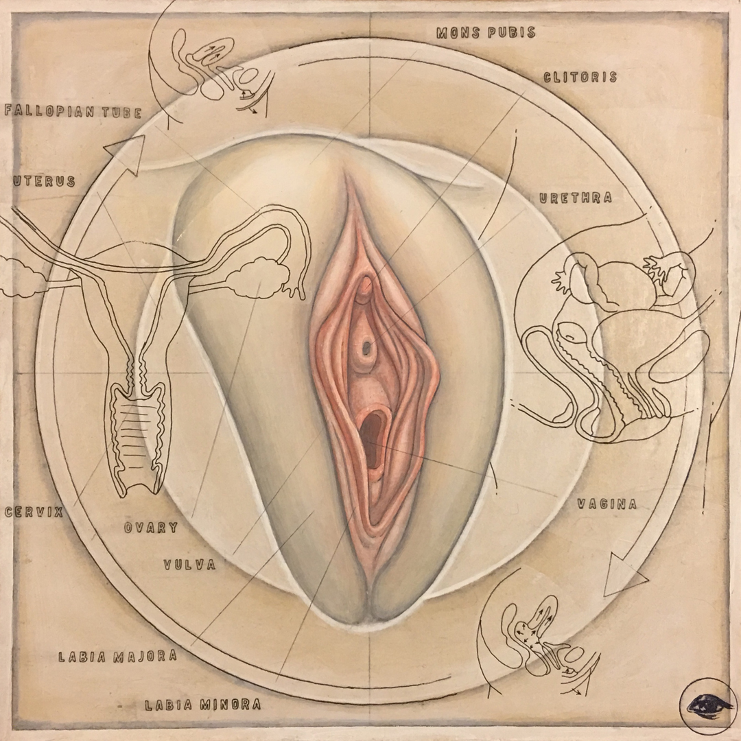 FemaleReproductive-5.jpg