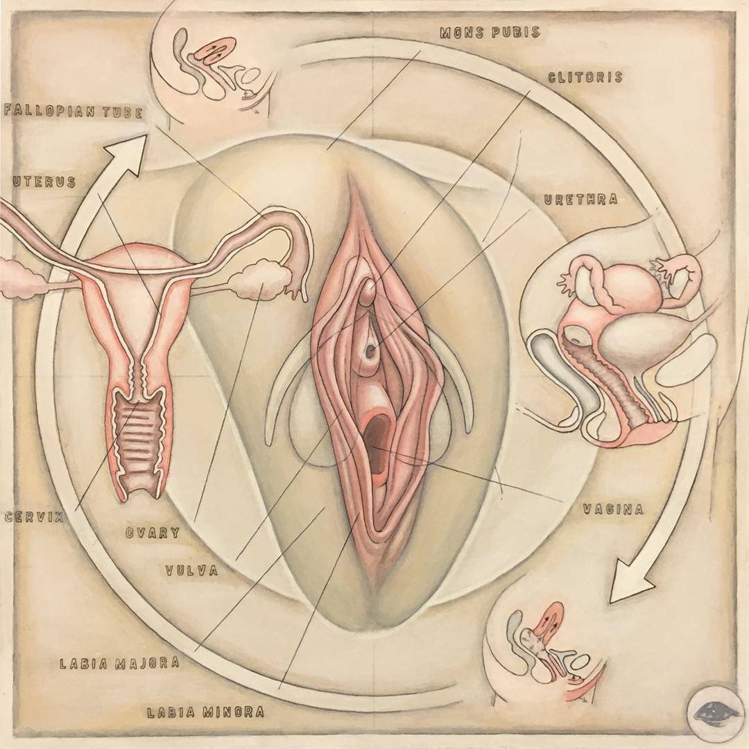 Human Reproductive (Female) (v.1.1)