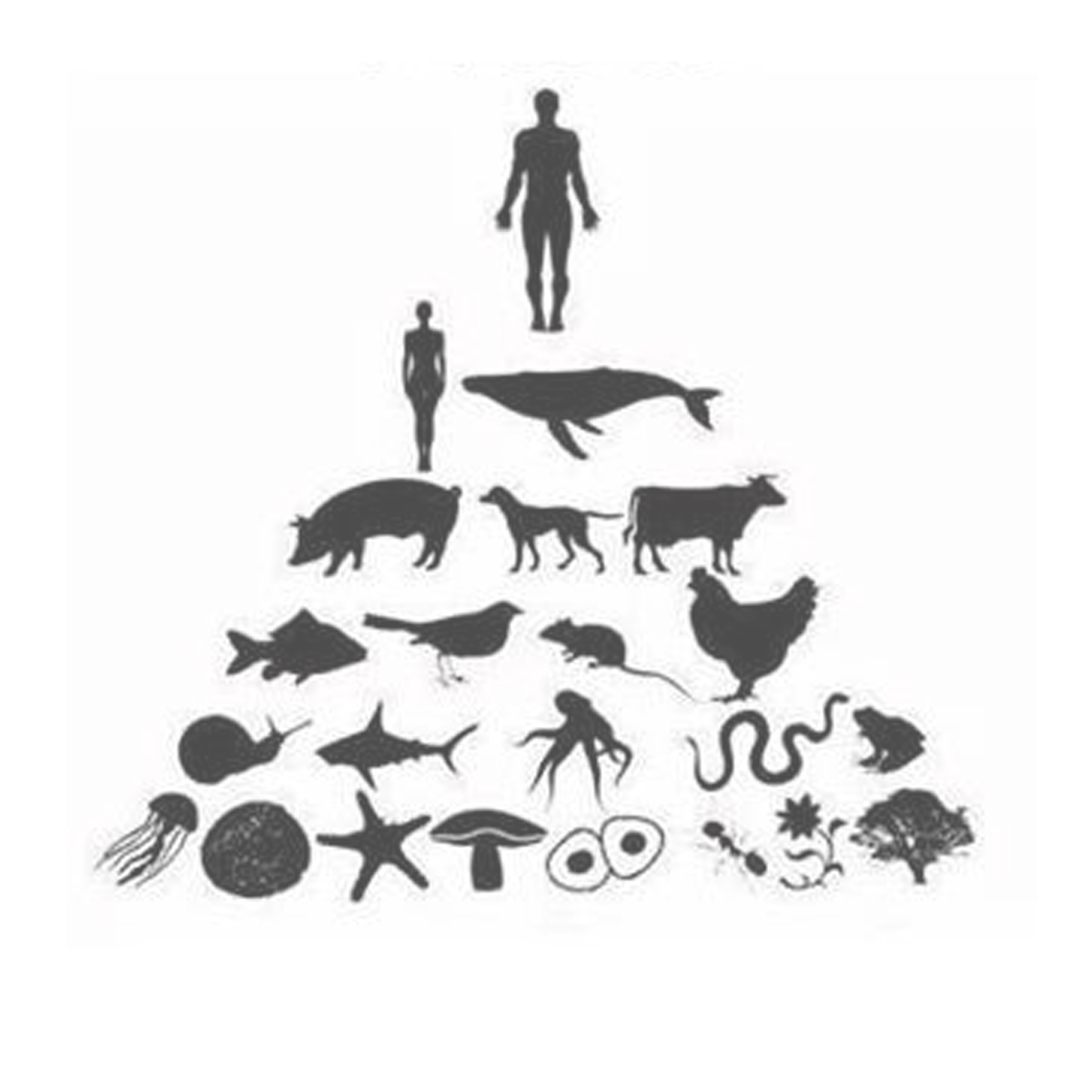 EcoSystem-Ego-Casey-Cripe.jpg