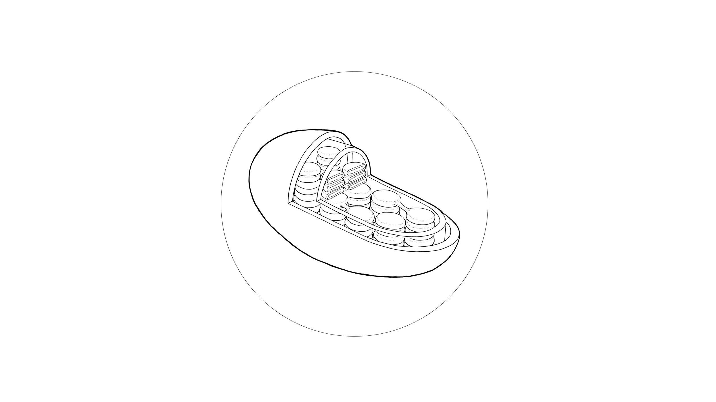 organelle ( chloroplast )