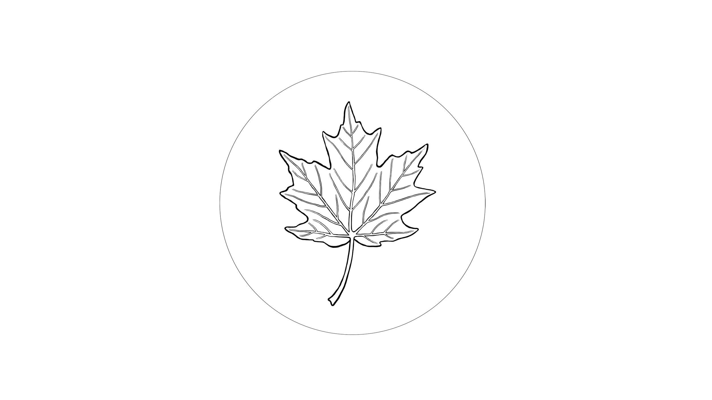 organ (leaf )