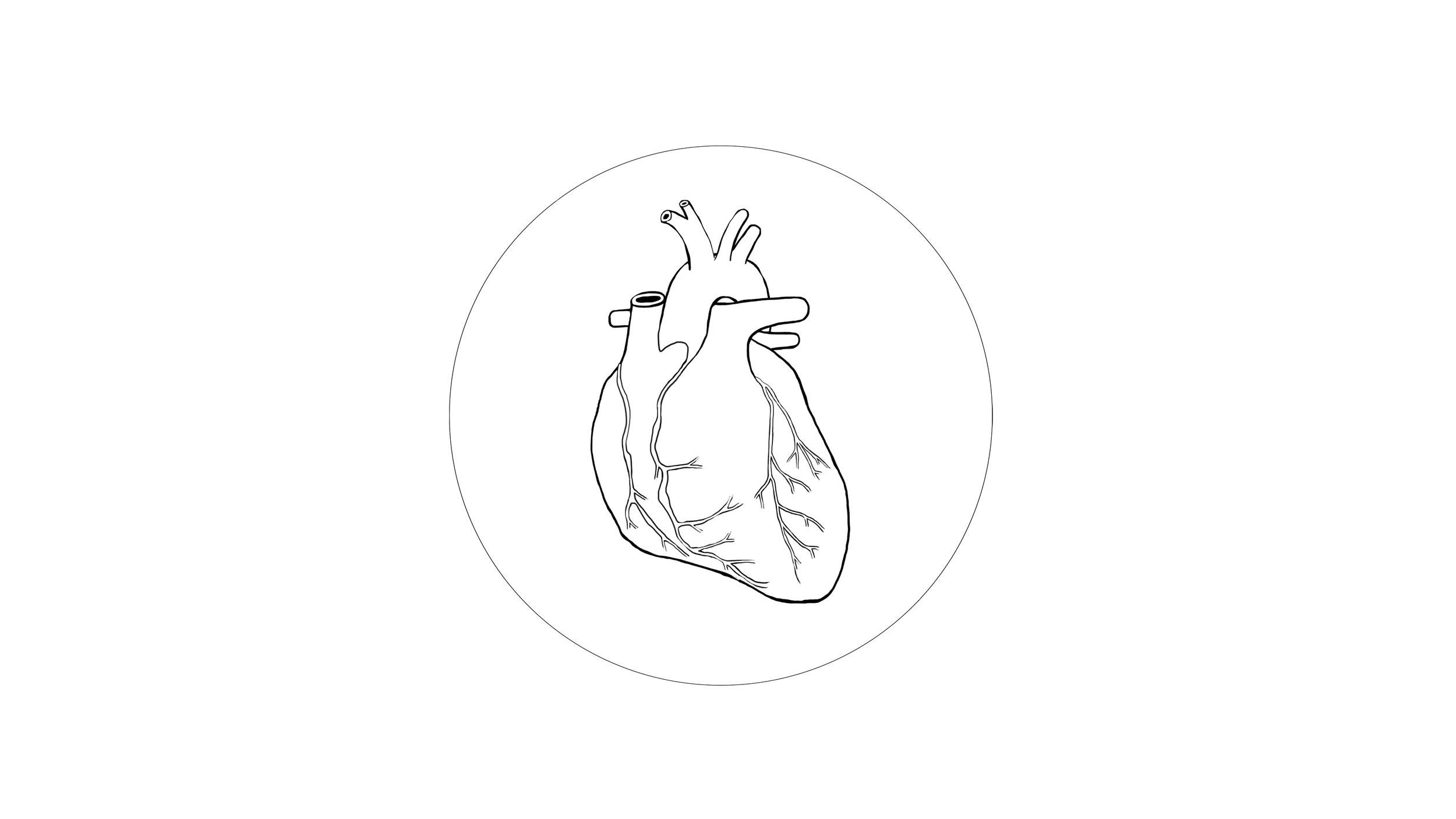 organ ( heart )