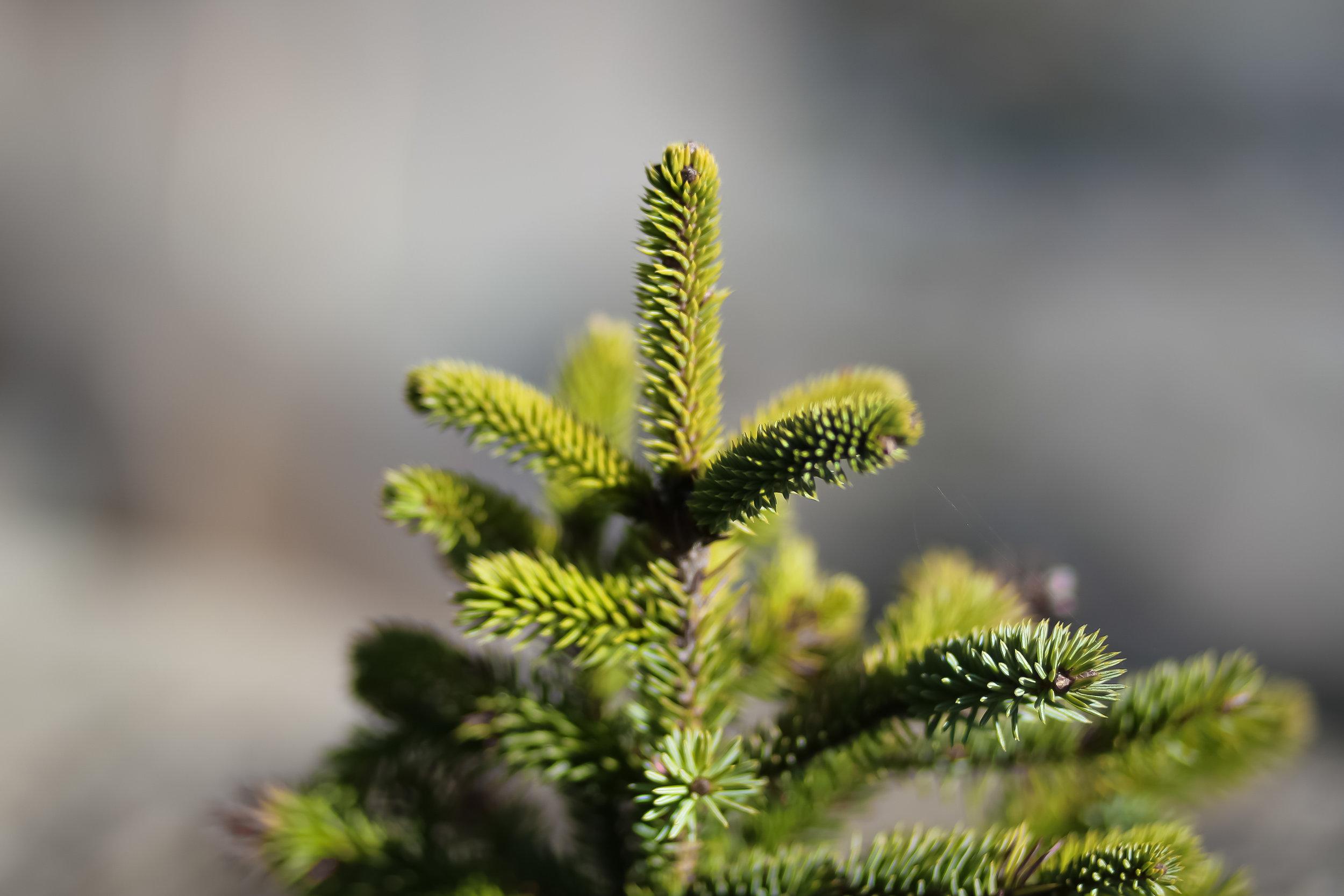 Mini Treetop